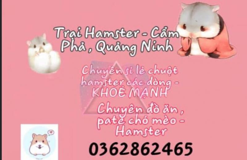 Hamster - Cẩm Phả, Quảng Ninh