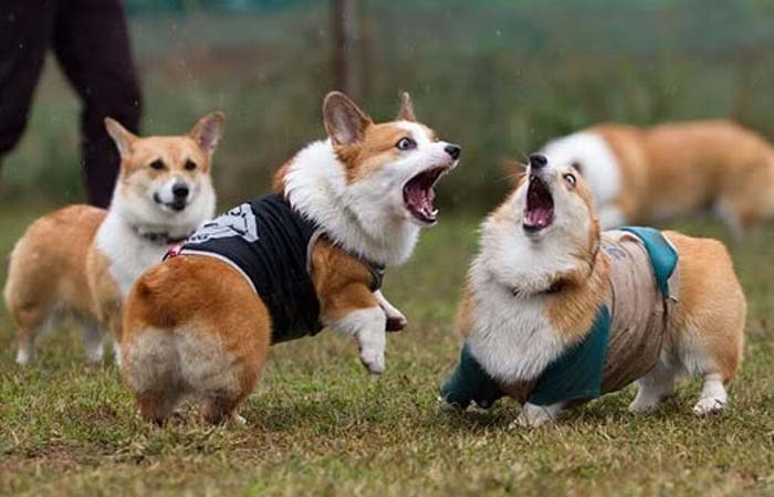 Hạn chế cho cún chơi với các chú cún khác đang bị nghi là mắc bệnh ve