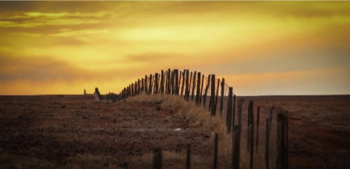 Hàng rào Dingo