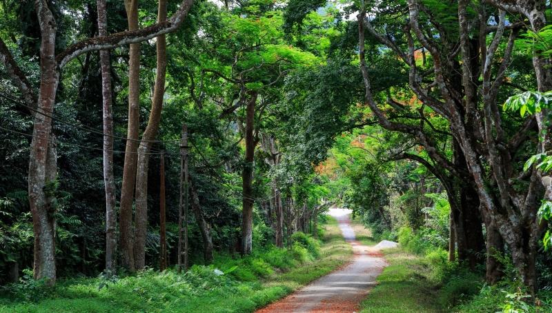 Hành trình về rừng Cúc Phương