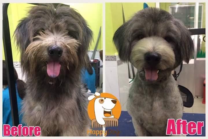 Happy Dog - Dog Grooming and Spa