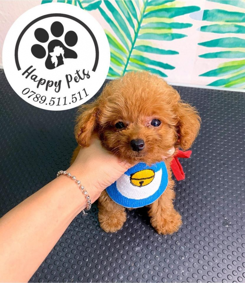 Happy Petshop