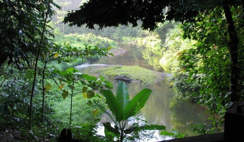 Di sản rừng mưa nhiệt đới đảo Sumatra của Indonesia bao gồm đến 3 công viên quốc gia