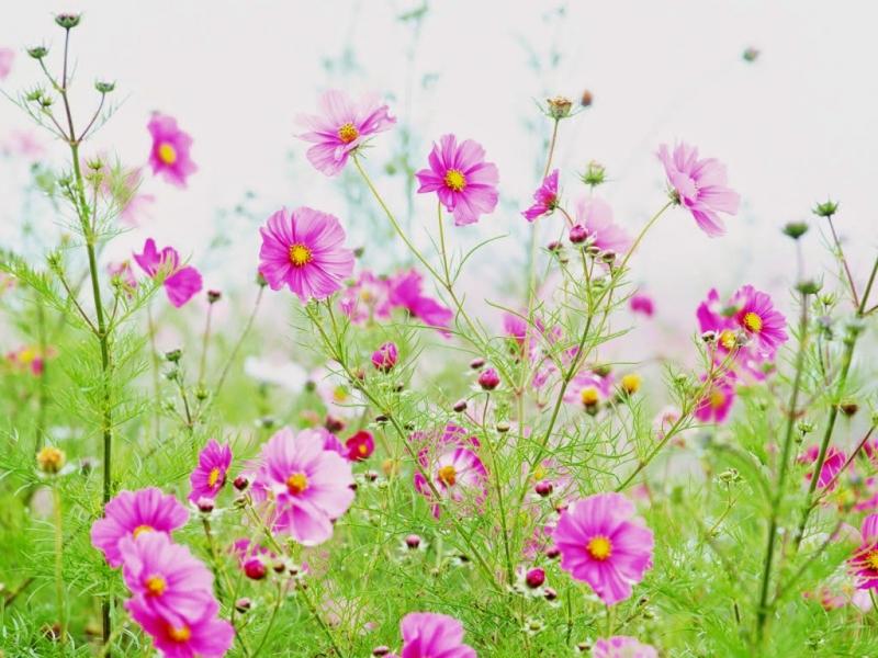Top 15 Hình ảnh đẹp nhất về hoa