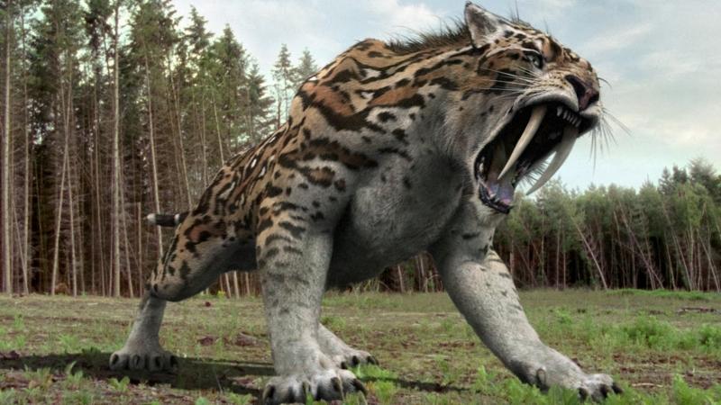 Chúng xuất hiện 42.000.000 năm về trước và cùng chung sống với loài người ở Châu Mỹ.