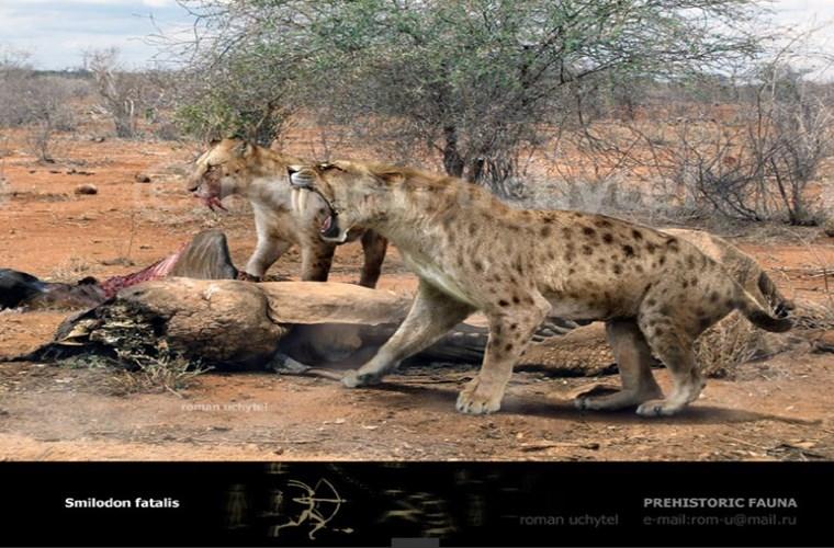 Thường đi săn theo đàn và hạ gục các loài động vật lớn hơn kích thước của chúng.