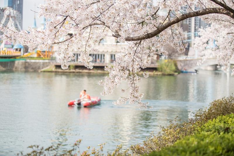 Hồ Seokchon là nơi lý tưởng để bạn tận hưởng trọn vẹn mùa xuân của Hàn Quốc