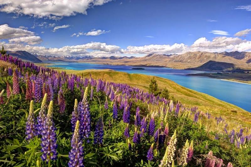 Hồ Tekapo hiện lên như một bức tranh lãng mạn về cảnh thiên nhiên non nước