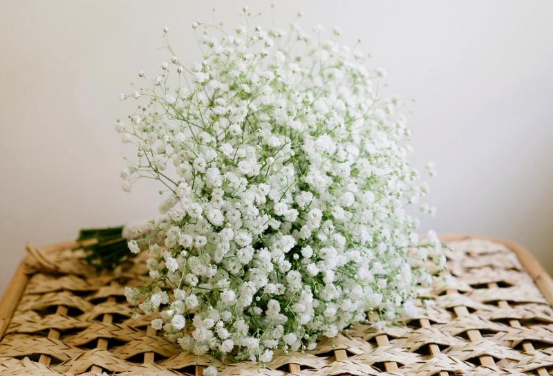 Hoa Baby trắng tinh khôi, lựa chọn hoàn hảo trong ngày lễ tình yêu