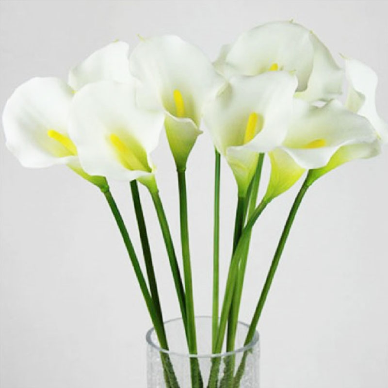 Hoa Lily kiêu sa