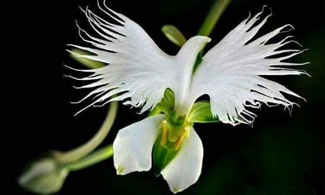 Bông hoa tựa như một chú chim hạc đang sải cánh