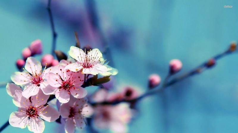 Từ ngàn đời nay sắc màu rực rỡ của những cánh hoa mai luôn mang lại nguồn sinh khí mới cho gia đình nhân dịp đầu năm.