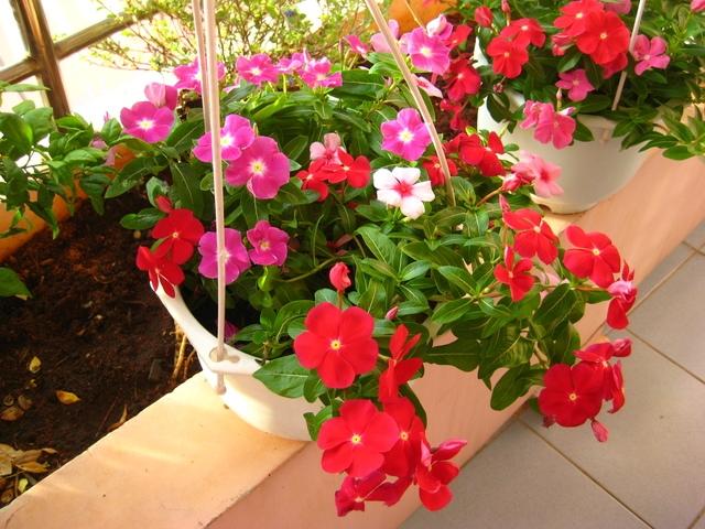 Top 15 Loại hoa đẹp dễ trồng ở ban công