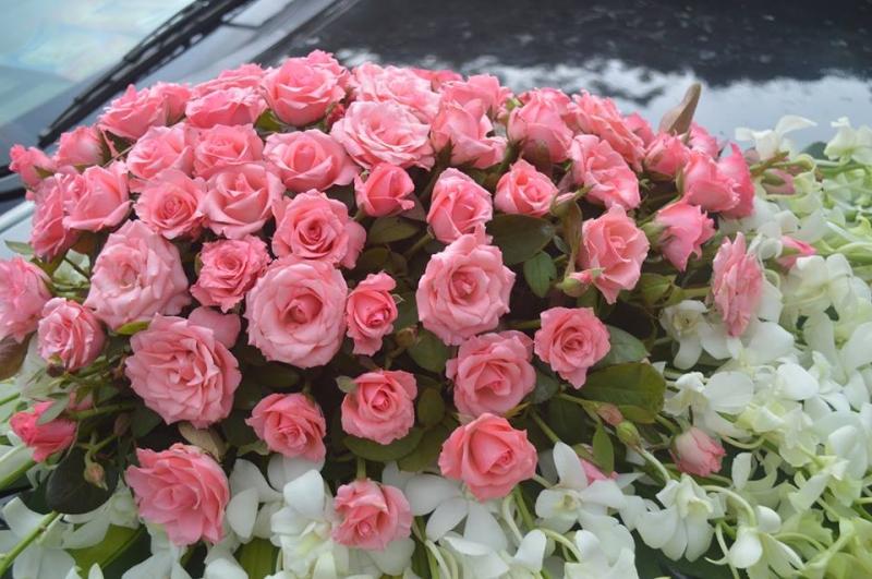 Hoa Hồng rực rỡ