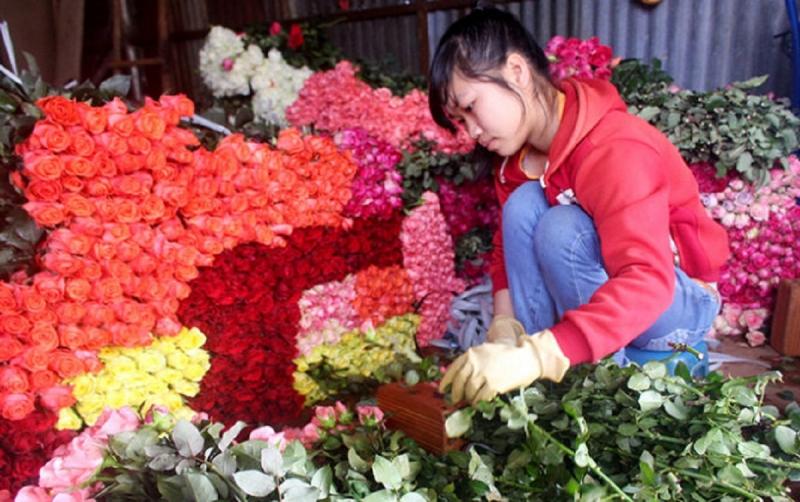 Hoa hồng là loại hoa phổ biến với nhiều người