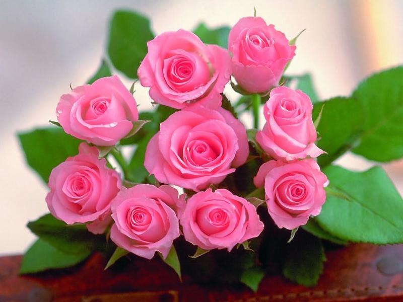 Hoa hồng có tác dụng làm đẹp da