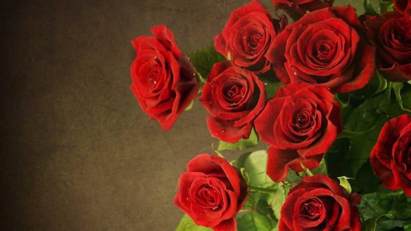 Hoa hồng nhung với sắc đẹp tuyệt diệu