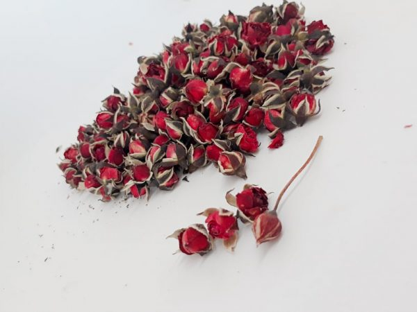 Top 12 Bài thơ hay về hoa hồng mới nhất 4