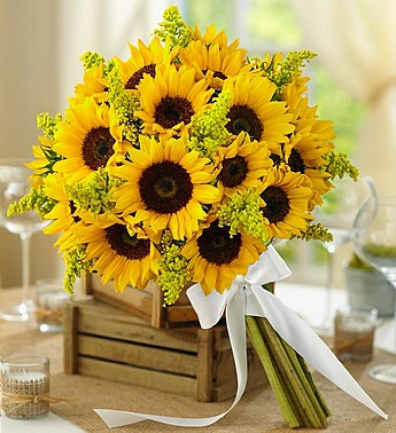 Loài hoa của mặt trời.