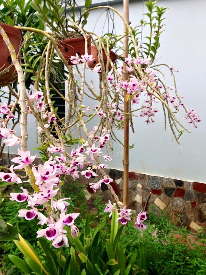 hoa Lan đẹp từ mọi góc cạnh
