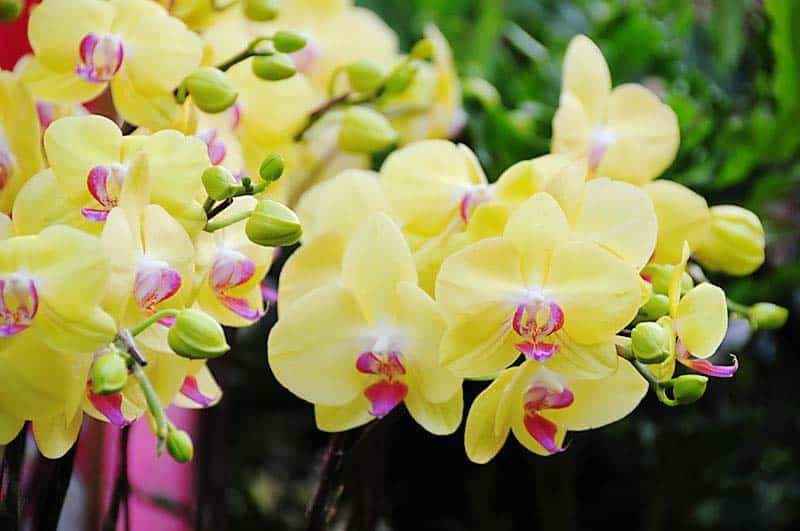 Loài hoa có nguồn gốc từ thiên nhiên và là nữ hoàng của các loài hoa.