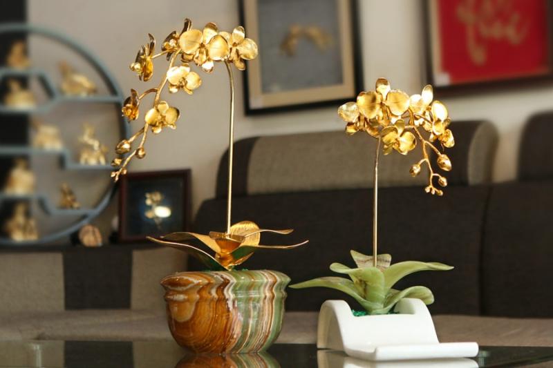 Hoa lan mạ vàng