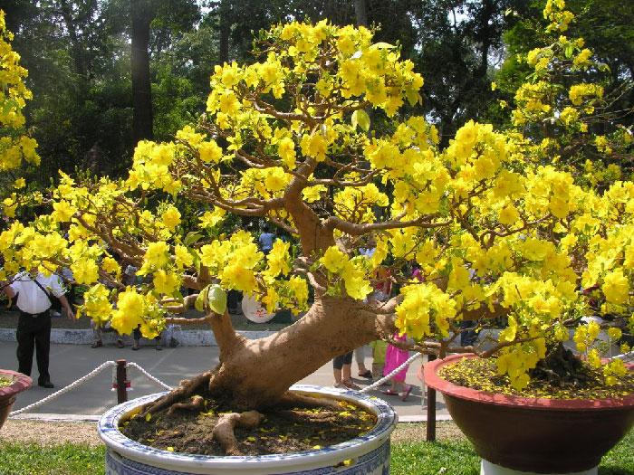 Top 18 loài hoa phổ biến nhất của ngày Tết cổ truyền Việt Nam