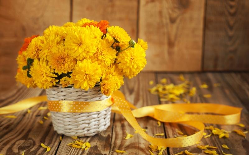 """Kết quả hình ảnh cho hoa phong thủy ngày tết"""""""