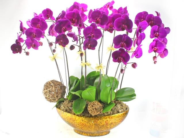Hoa phong thủy cho ngày Tết: Lan - tượng trưng cho sự quyền quý và sang trọng.