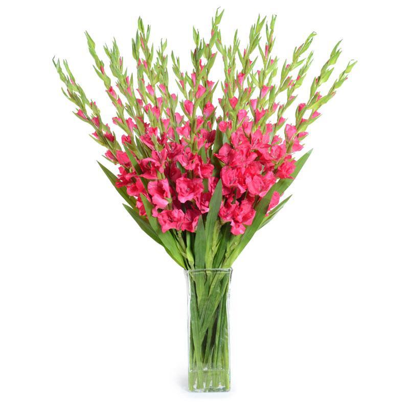 Hoa lay ơn còn được gọi là lan kiếm trong phong thủy có tác dụng trừ tà, xua đuổi điềm xấu, mang đến may mắn, điềm lành cho gia chủ.