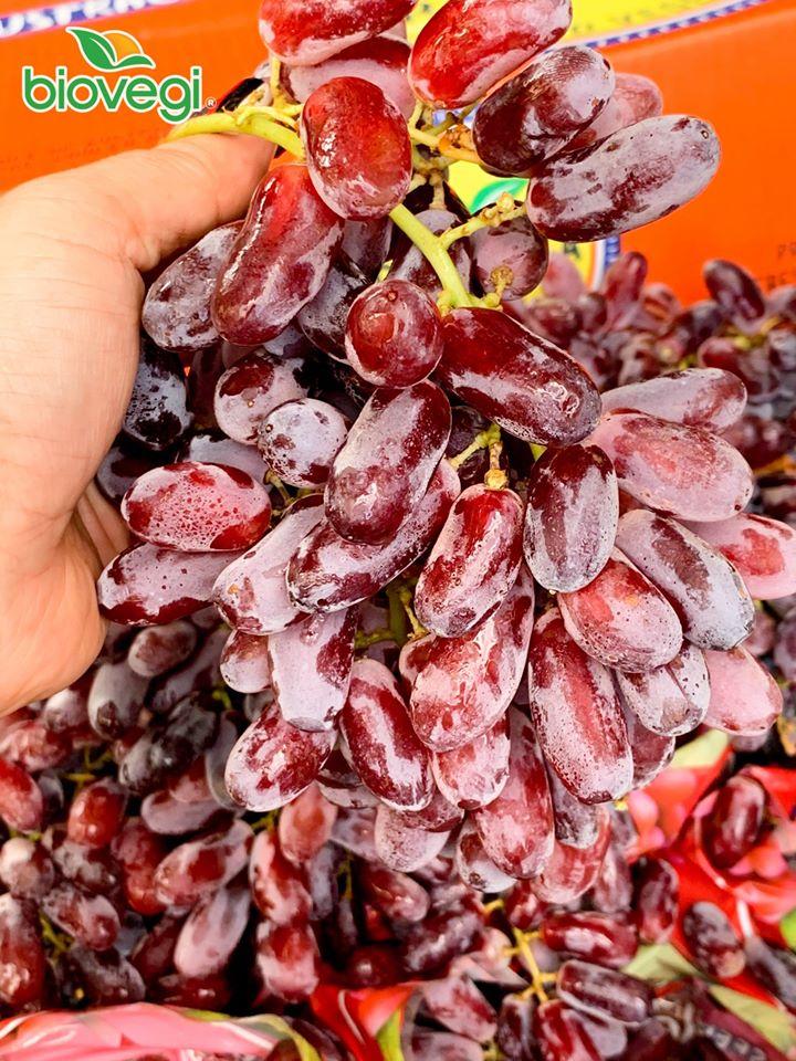 Hoa quả nhập khẩu sạch Biovegi
