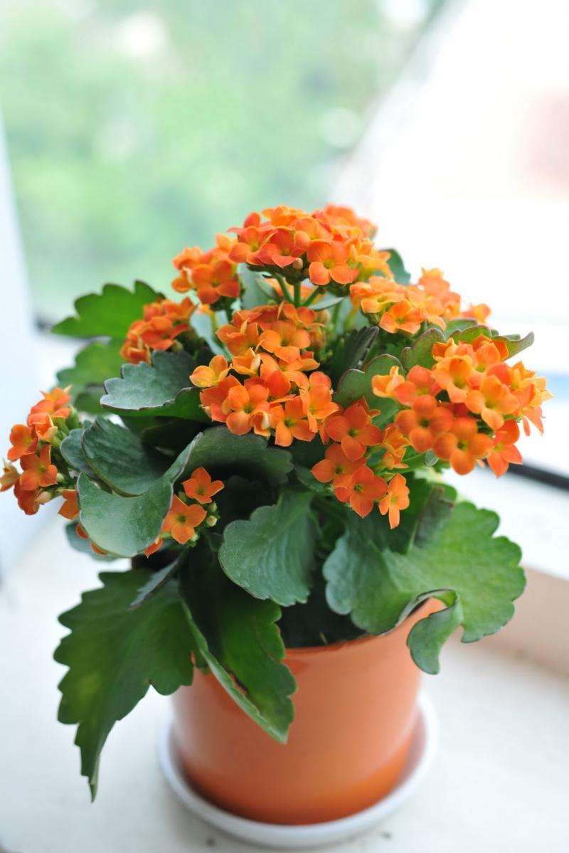 Chậu hoa sống đời nhỏ nhắn, xinh xắn