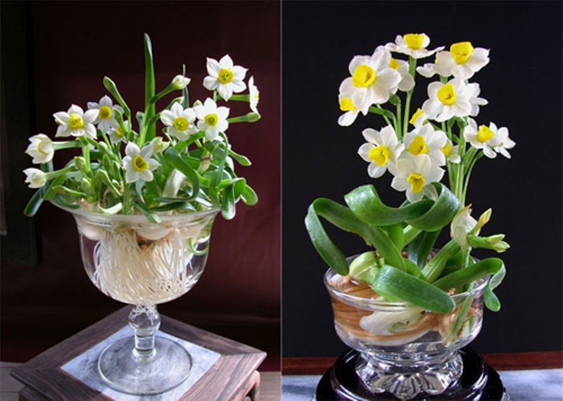 Top 15 loại hoa đẹp và ý nghĩa dành cho phòng khách dịp Tết Nguyên đán
