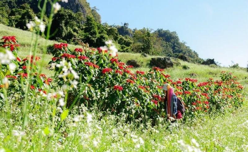Hoa Trạng Nguyên đỏ