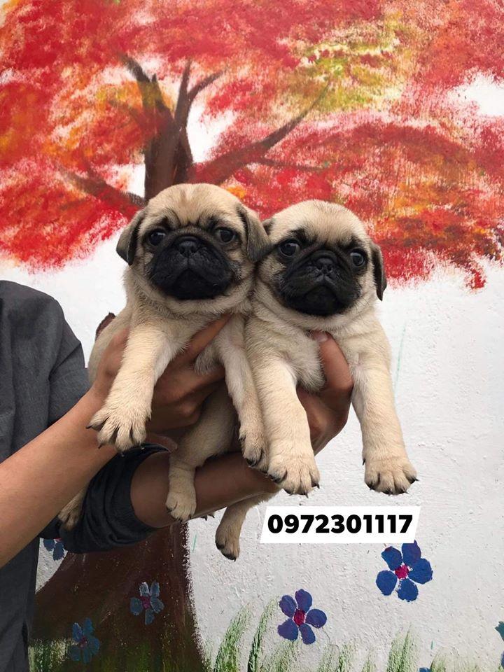 Top 4 Cửa hàng thú cưng và phụ kiện thú cưng tại Thành phố Vinh, Nghệ An