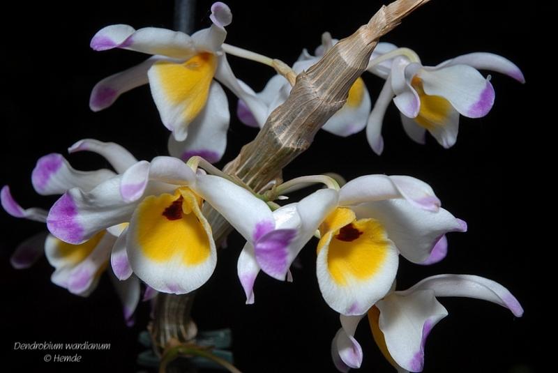 Cận cảnh hoa