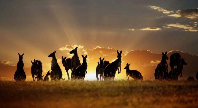 Biểu tượng của nước Úc xinh đẹp