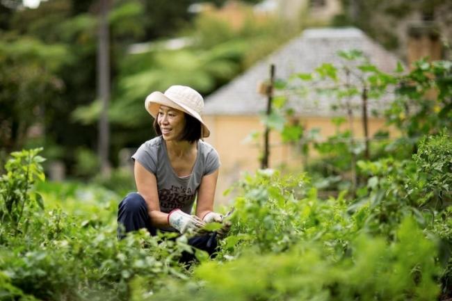 Học làm vườn