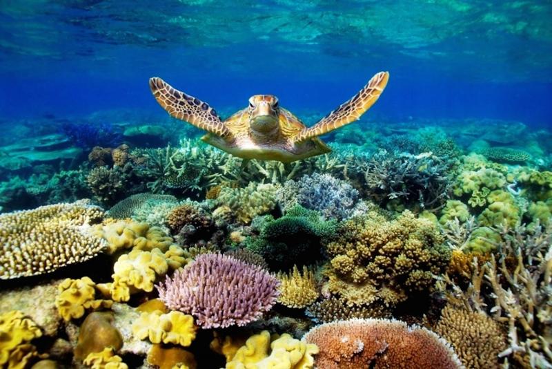 Nơi đây có hệ sinh thái biển rất đa dạng