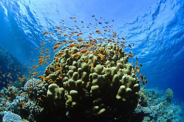 Coral in Bay Canh Island