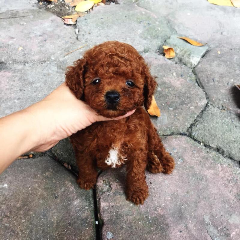 Hồng Thành Pets