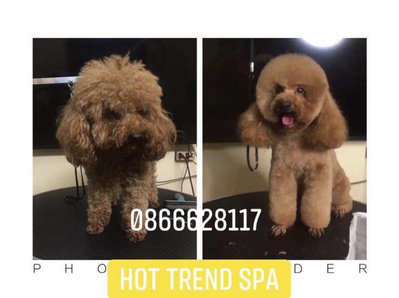 Hot Trend Spa Pet Shop