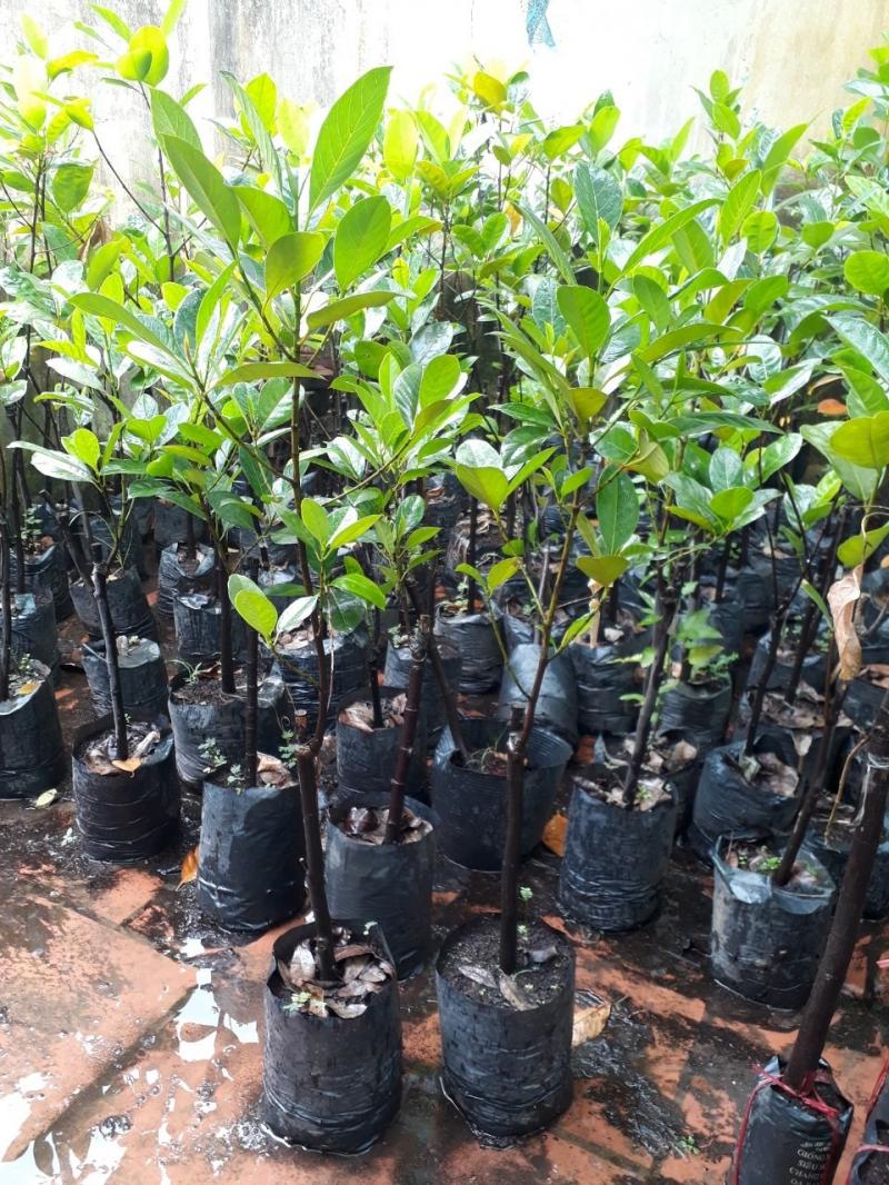 Trung tâm cây giống nông nghiệp Việt