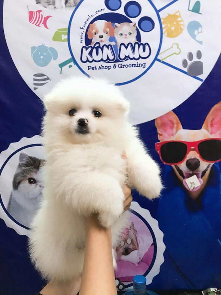 Kún Miu Pet Shop