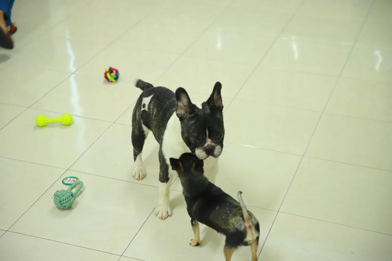 Nice Pet Clinic & Spa