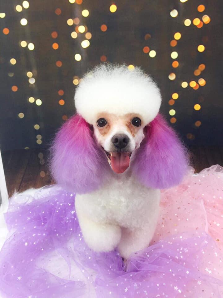Poppy Pet Shop