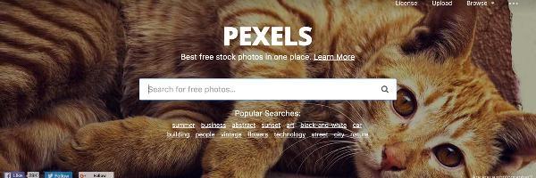 Pexels (nguồn internet)