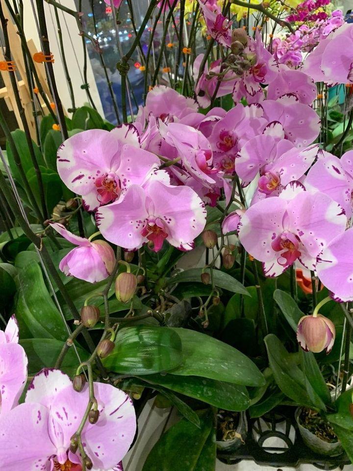 Hương Flower