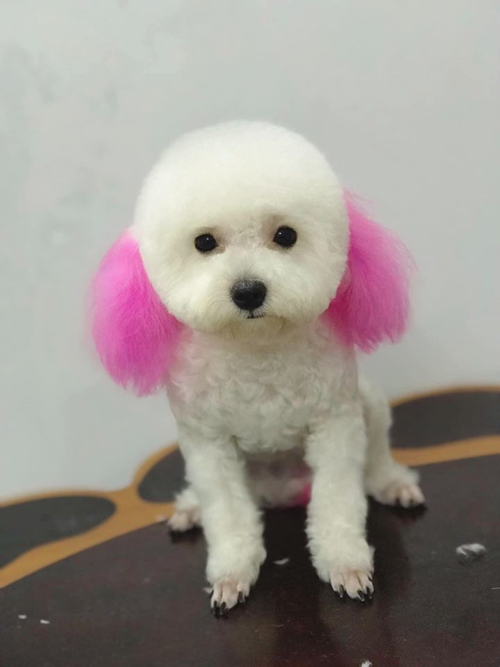 Huong Poodle Home