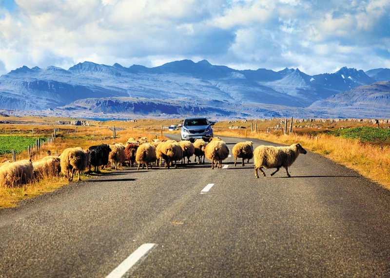 Tỉ lệ sở hữu xe hơi ở Iceland là 644 xe trên 1000 người